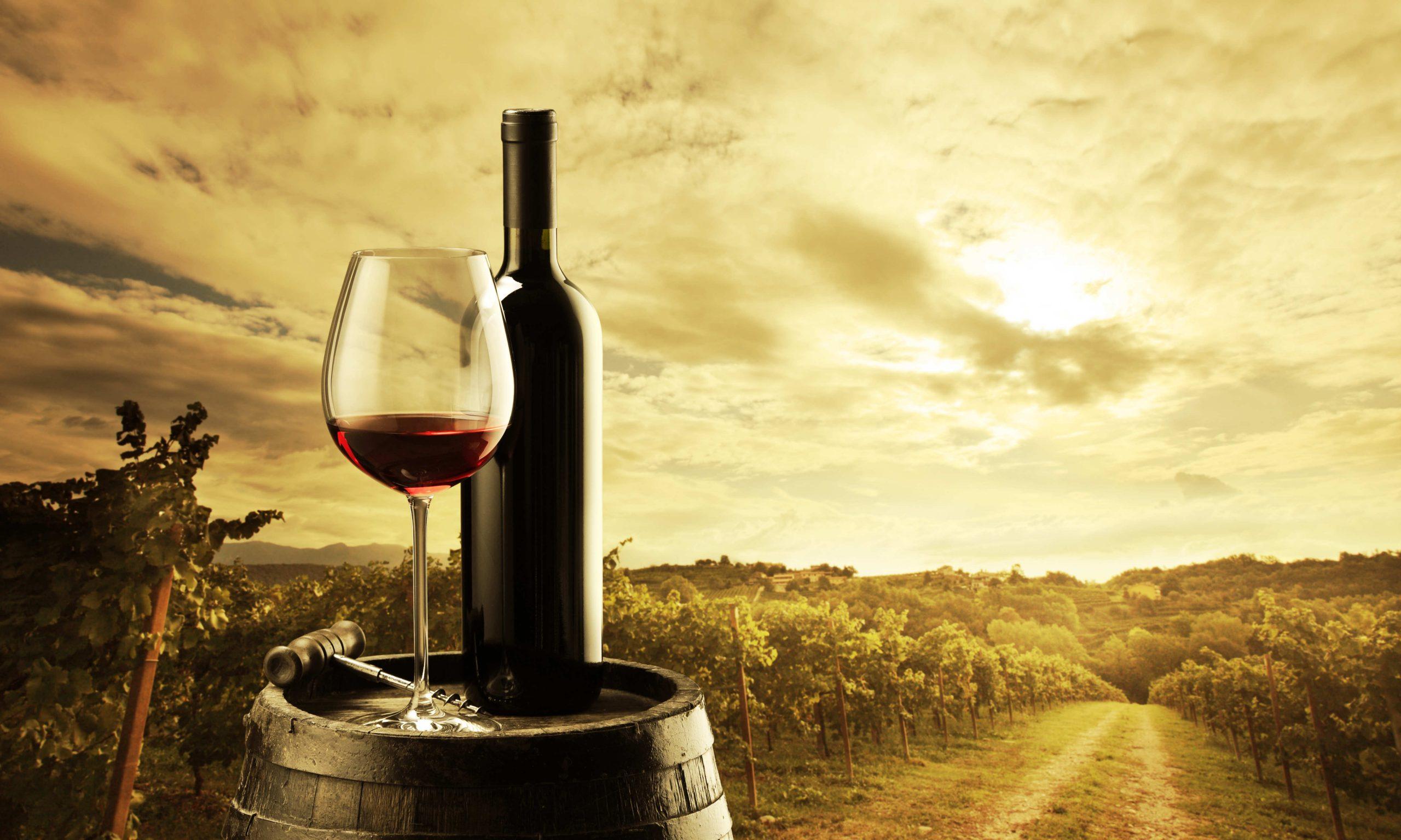 Únete al enoturismo y visita estas 5 rutas del vino en España
