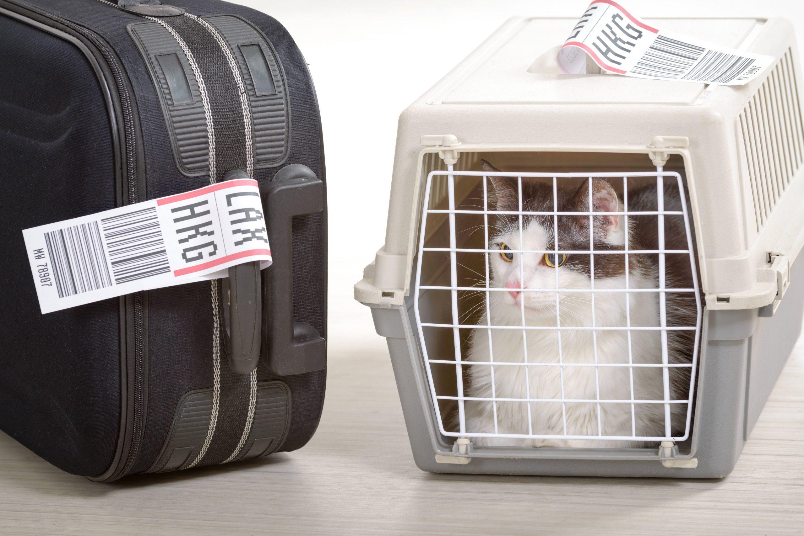 El transporte de animales por avión en la actualidad